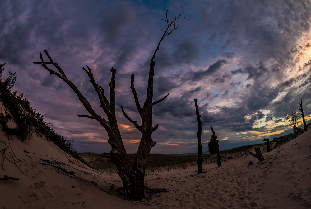 Dead Wood, Taken with Olympus E-M1 and M. Zuiko 8mm 1.8 Fisheye