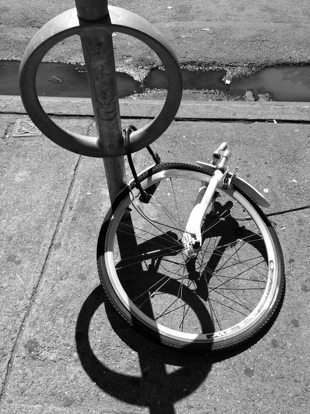 The bikes of New York