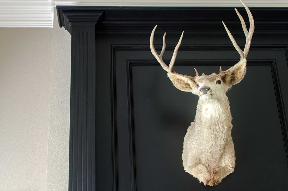 Modern taxidermy