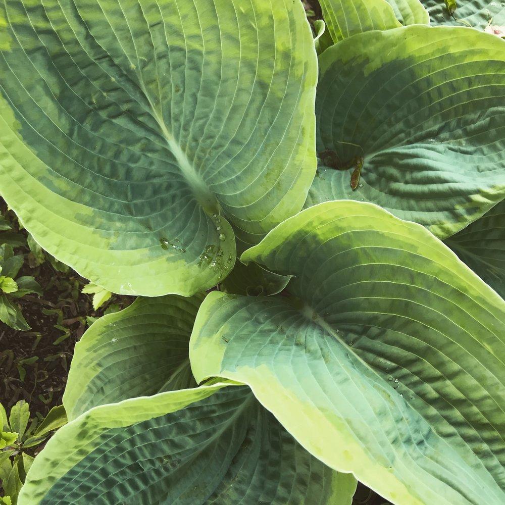 Portland Plants