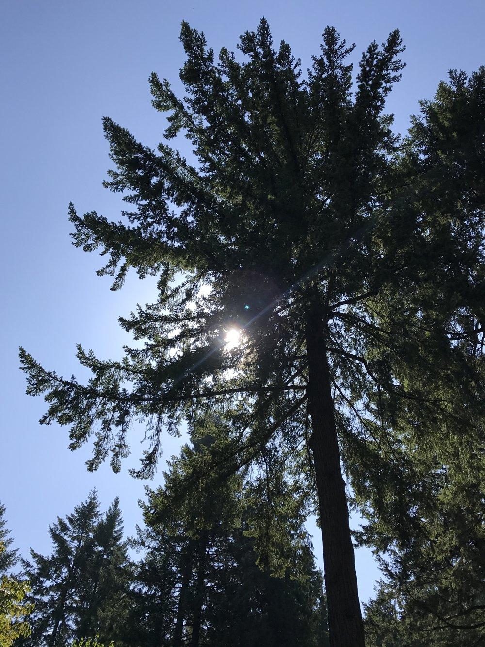 Sun peeking through the trees