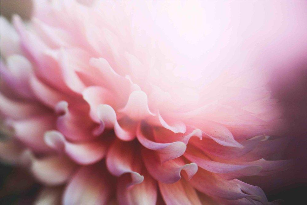 FLOWER PINK kari-shea copy.jpg