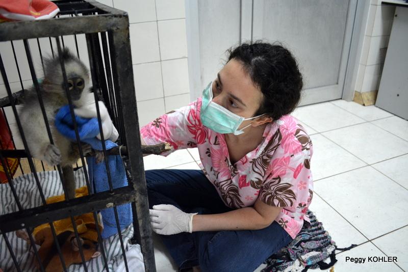 Dr. Alia Zelko BVetMed MRCVS Founder & Head Veterinarian