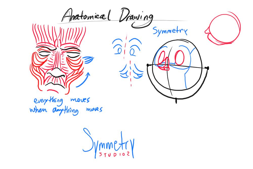 AnatomicalDrawingNotes.jpg