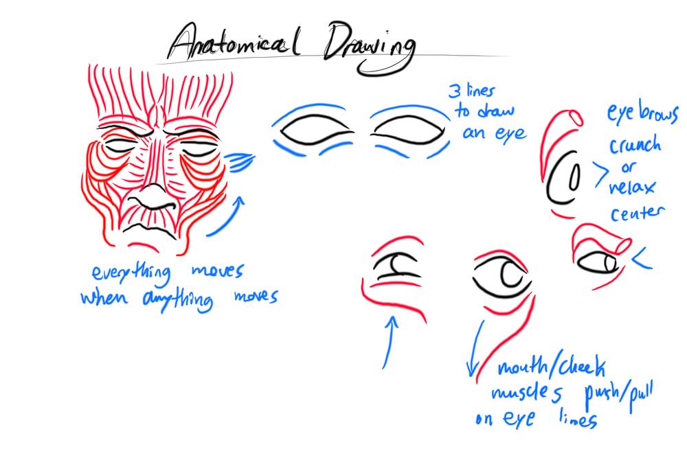 AnatomicalDrawingNotes2.jpg