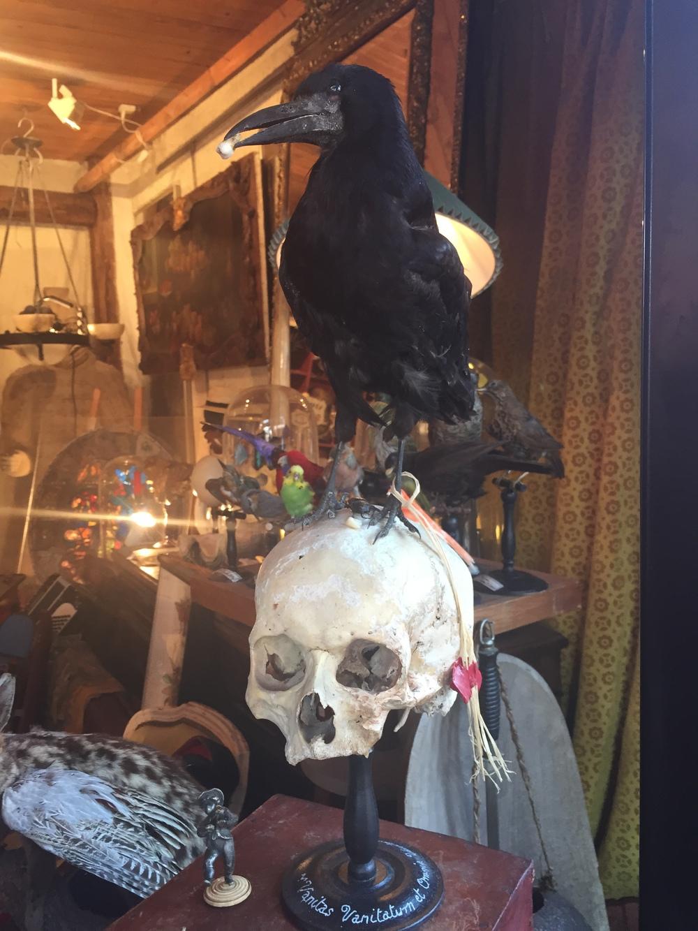 skull raven paris