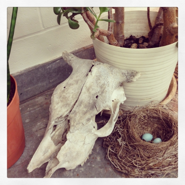 Just hanging out...skull collection, bird nest with eggs and plants.