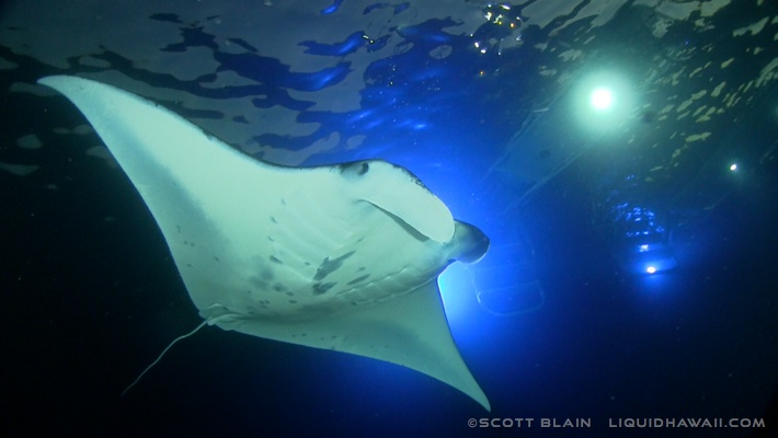 Manta Ray Night Snorkel Adventure Tour