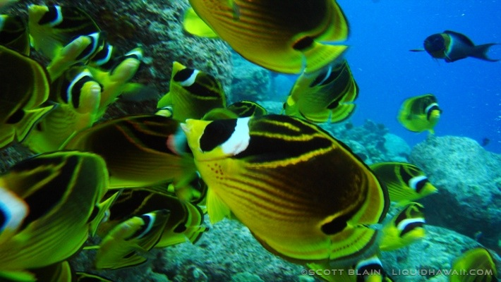 4#Best Day Fish Scott Blain ©LiquidHawaii.com.jpg