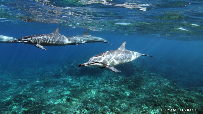 5#Best Dolphin Ryan 00 ©LiquidHawaii.com.jpg