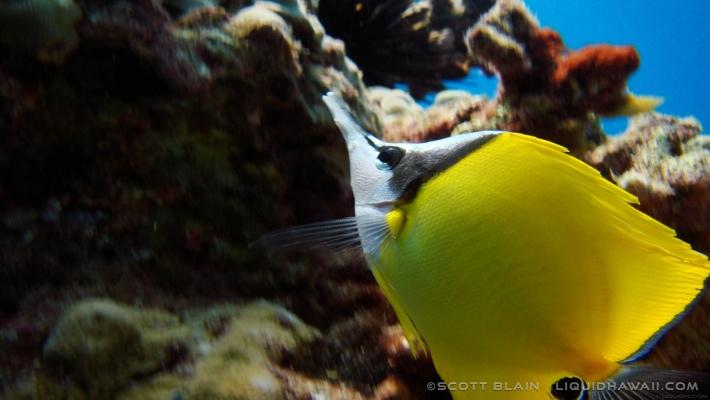 18#Best Day Fish Scott Blain 04©LiquidHawaii.com.jpg