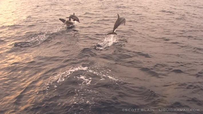 16#dolphins©LiquidHawaii.com.jpg
