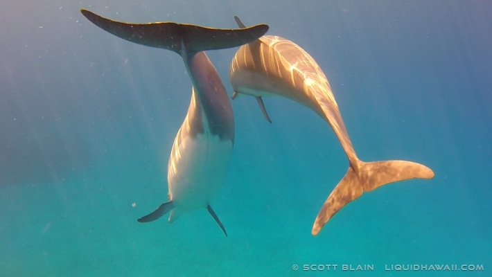 11#Dolphinbest1-04-11-14©LiquidHawaii.com.jpg