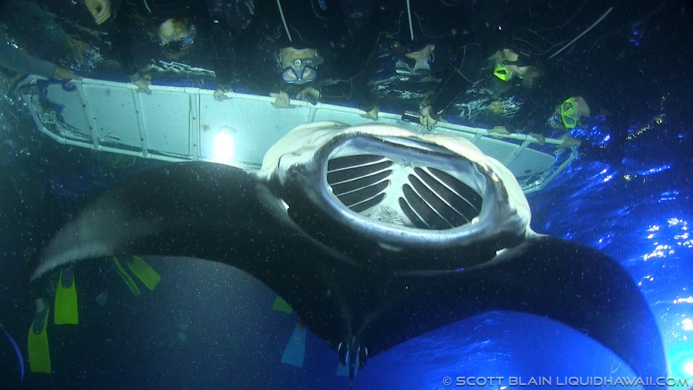 Night Manta Ray Snorkel  Hawaii