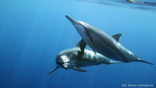 Swim With Dolphins Kona Hawaii