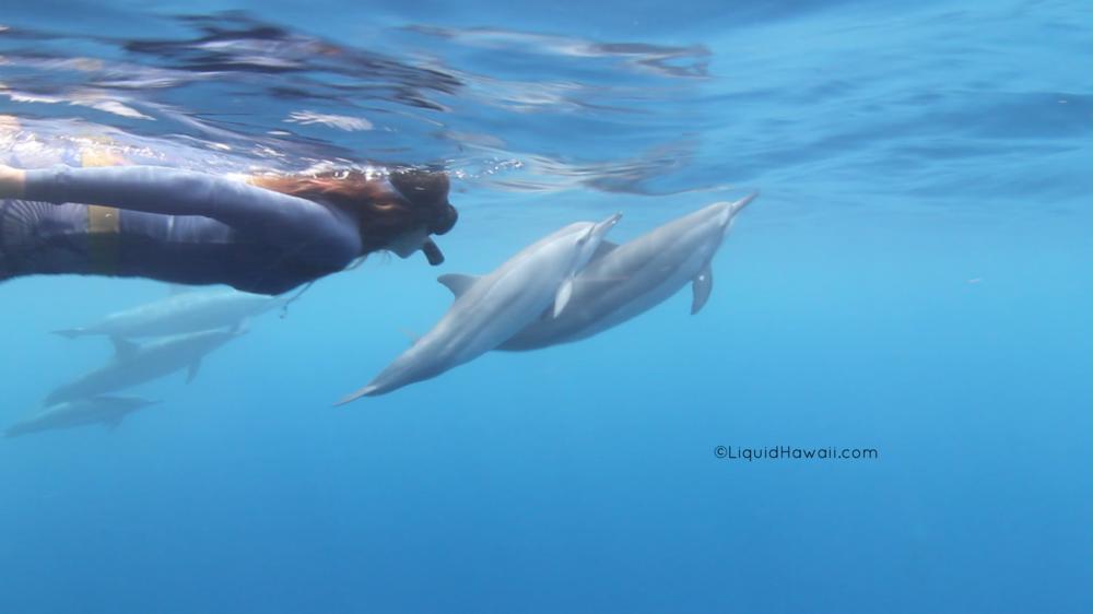 Dolphin Swim Snorkel Adventure Tour with Liquid Hawaii