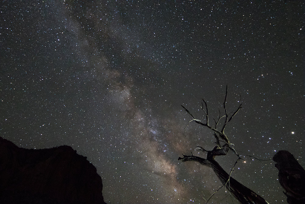 Dead Tree Under the Milky Way - Capitol Reef National Park