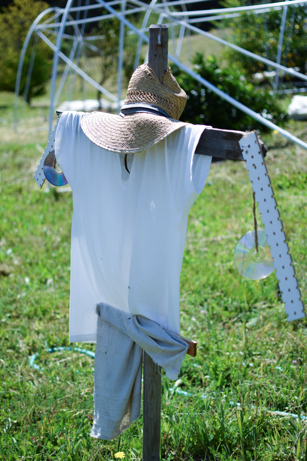 Our recycled scarecrow