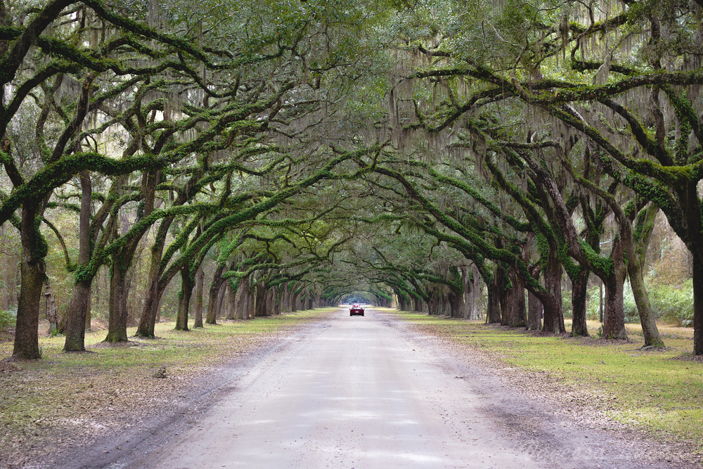 wormsloe plantation live oak driveway
