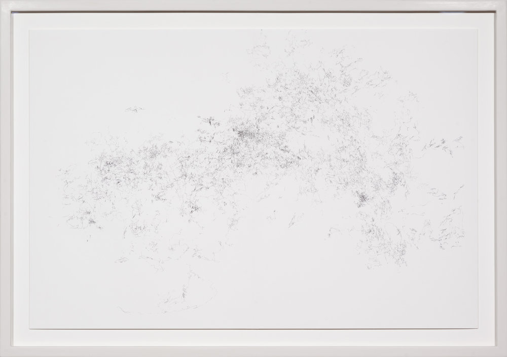 Hängende Gärten , 2015  pencil on paper  57 × 80,5 cm