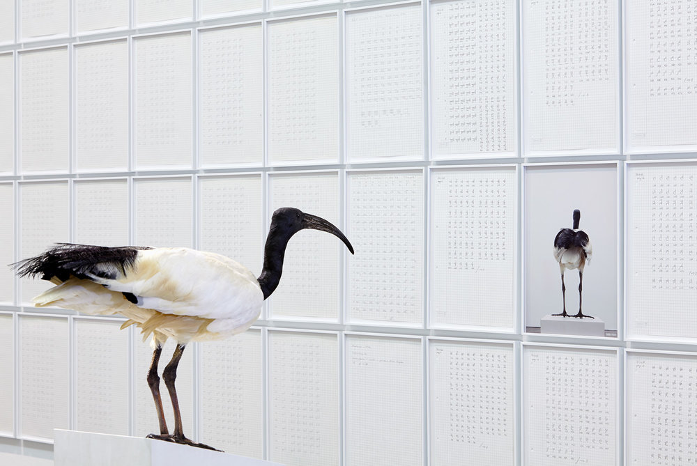 Heiliger Ibis , 2013  Egyptian sacred ibis on stucco base, framed photo  156 × 62 × 25 cm