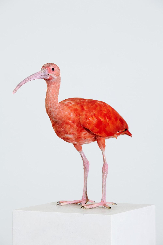 Spiegelwächter (Subjekt/Objekt) , 2013  Scarlet ibis on stucco pedestal  178 × 50 × 25 cm