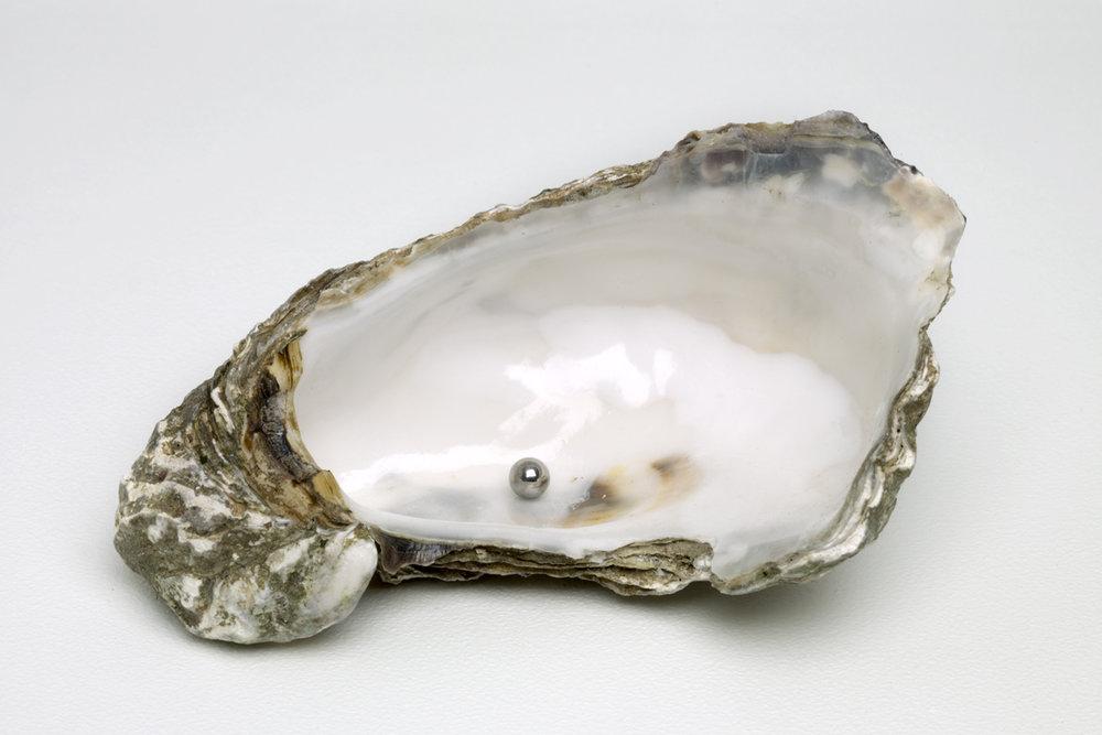 Ausstattung und Aneignung eines Objekts durch Liebe (Ready-Made) , 2013  oyster, metal ball