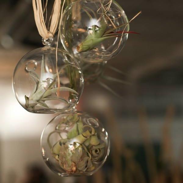 airplant-terrarium.jpg
