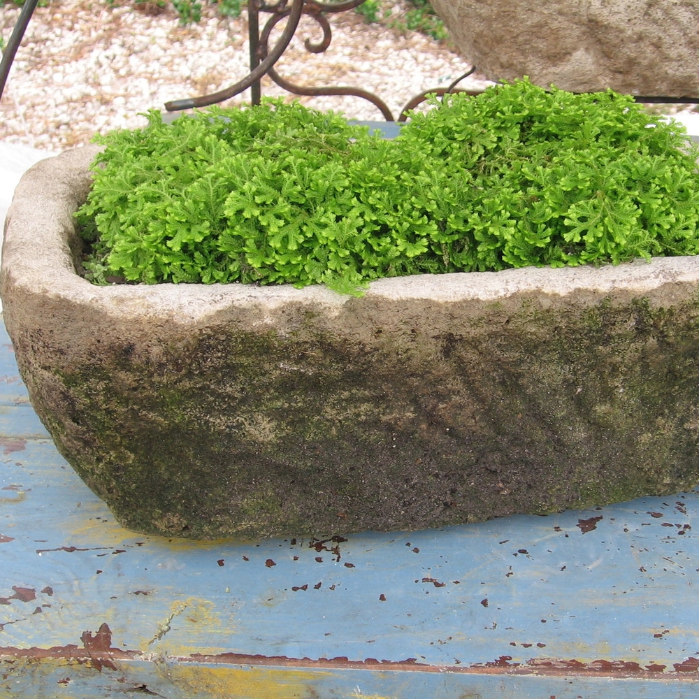 Moss-filled-stone-trough.jpg