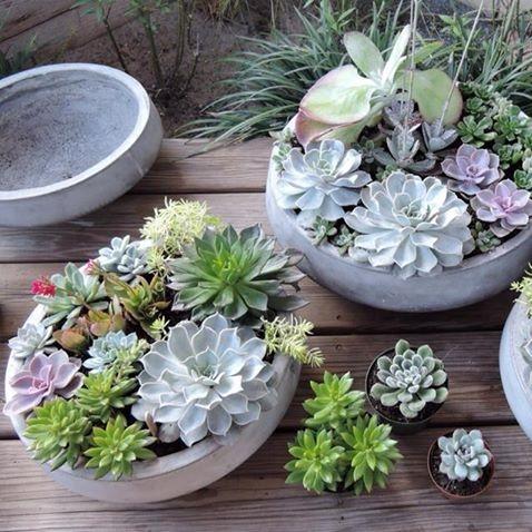 succulent-dish-planters.jpg
