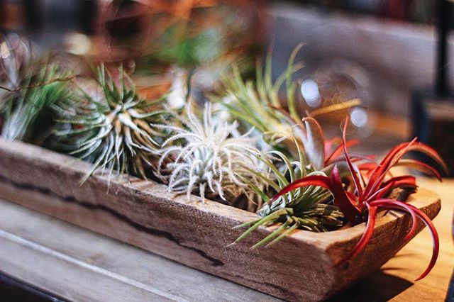 All the little #airplant babies... come snatch 'em up! #porchtherapy #houseplantclub