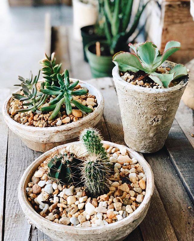 Little cactus in a big pot. 📷: @eastendmkt #cute #welovecacti