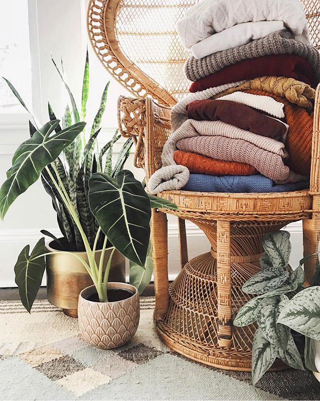 We're ready for some more sweater weather. How about you? 📷: @erynpasternak #realhouseplantsoforlando