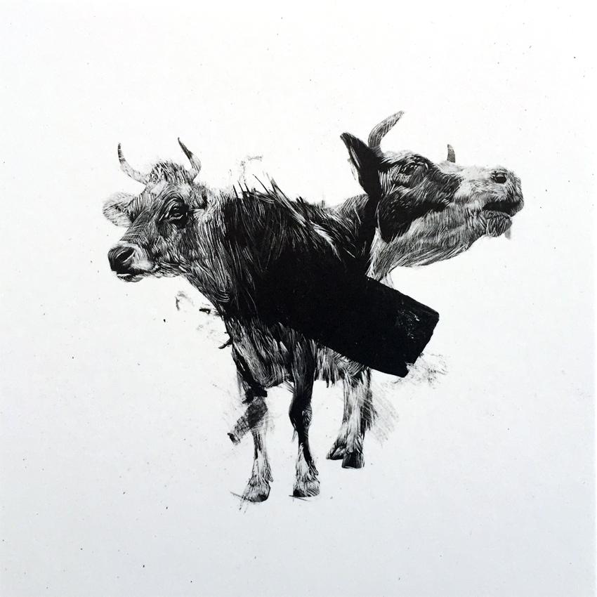 Ou koeie