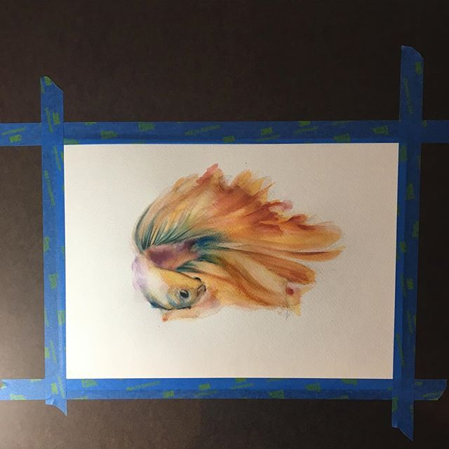Got a little work in progress going #art #fish #betta #watercolor