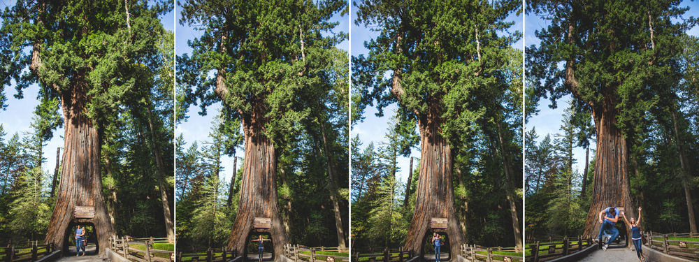 northern california road trip chandelier tree redwoods