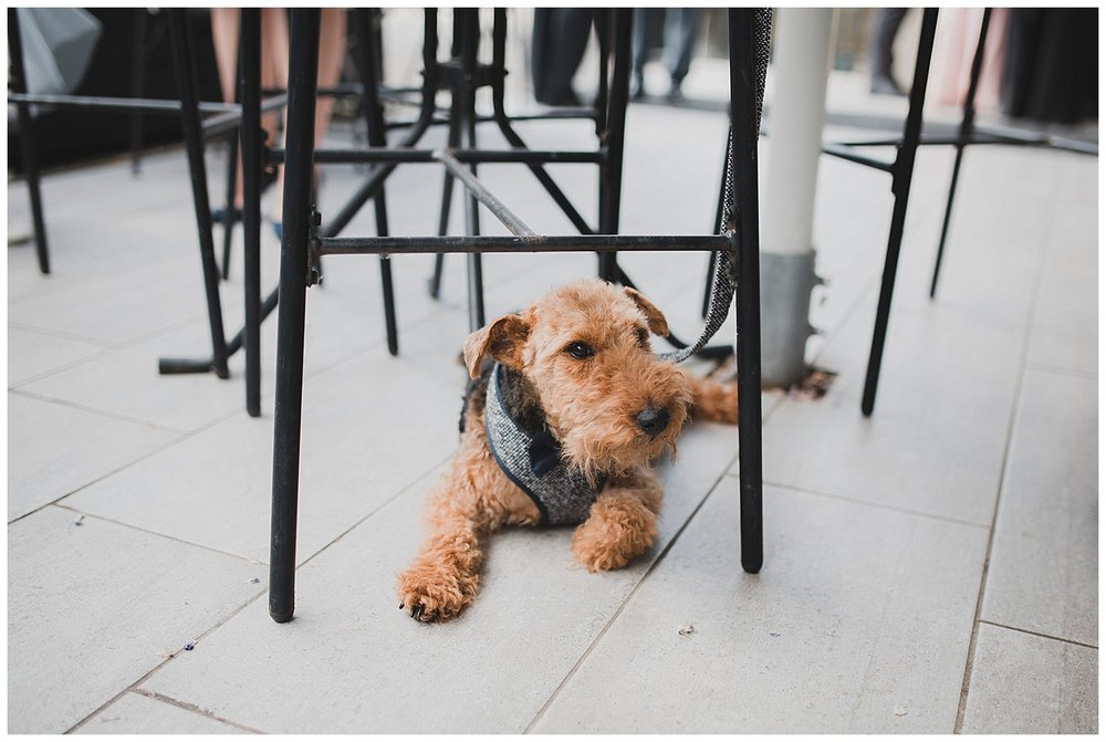 Bob the Welsh terrier retreats under a table at this Yellow Broom wedding.