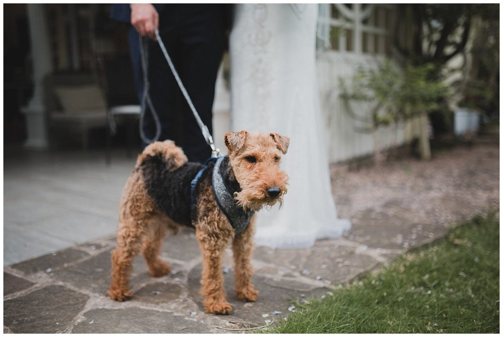 Bob the Welsh terrier wore a bow tie at this Cheshire wedding.