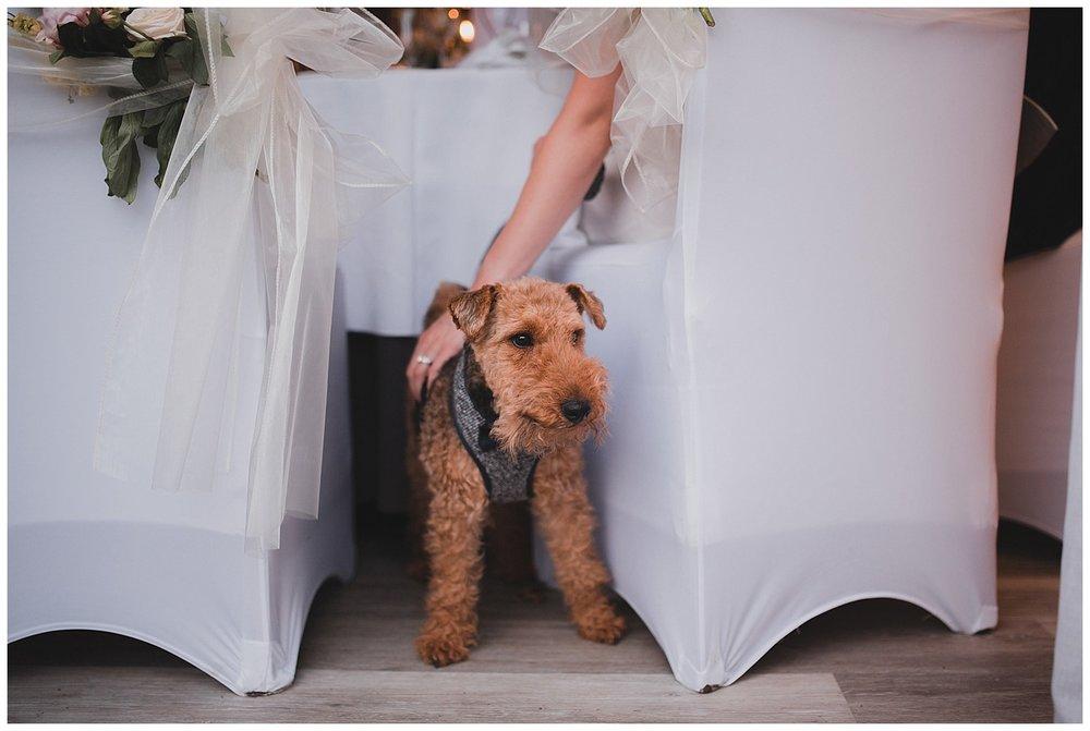 Pets at weddings.
