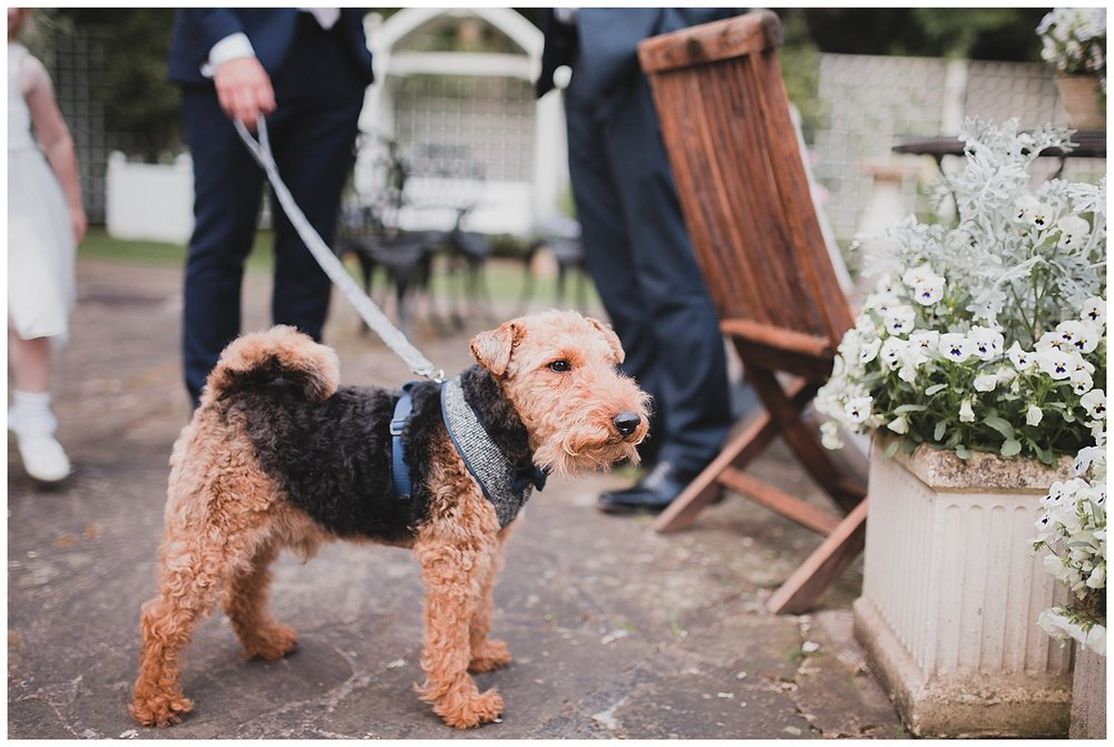 Bob the dog has a walk in the garden at this Cheshire wedding.