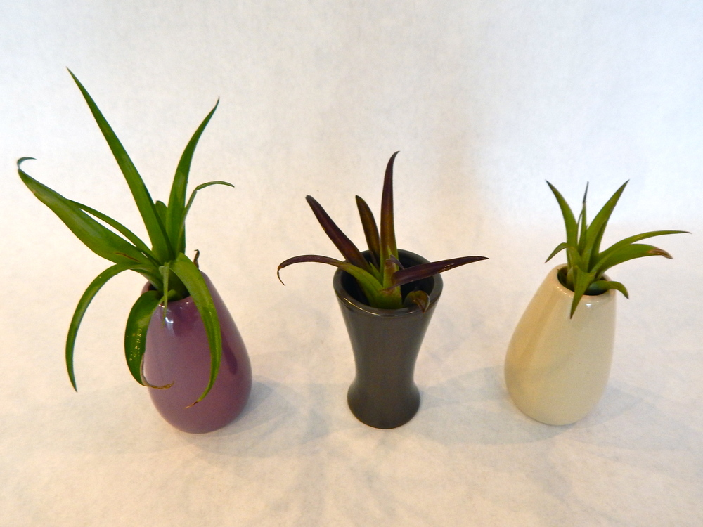 These adorable Chive vases make great home for air plants or for small flowers.