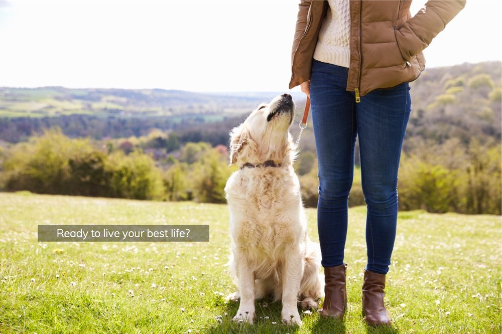 close-up-of-golden-retriever-on-walk-in-countryside-picture-id546200402-2.jpg