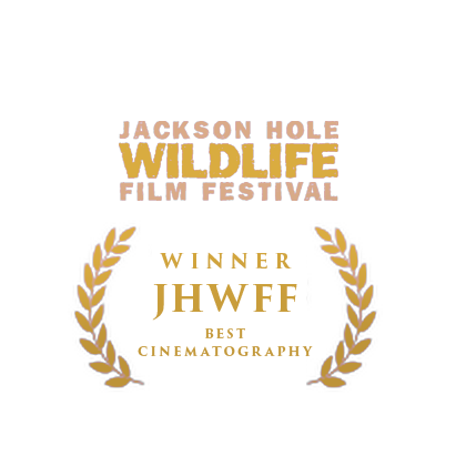 Jackson Hole Wildlife winner