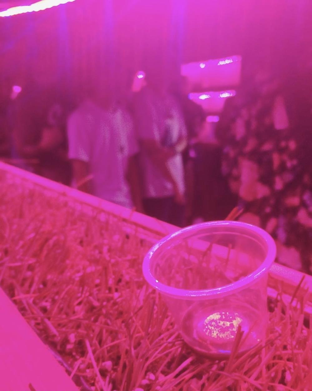 #tbt to last week when we were still moshing and juicing wheatgrass. Goodbye, #permacounterculture ! #sopunk  #wheatgrass  #hamfam  @wowsugi  #acreativedc 🌾  post by  ndowd09