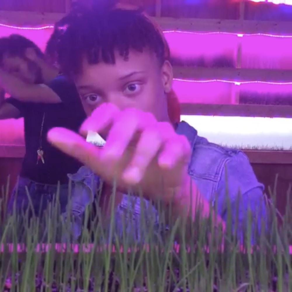 @piano_zara tickling the #wheatgrass  @hamiltoniangallerydc  #permacounterculture  #vibrations  #acreativedc   post by  sojournals