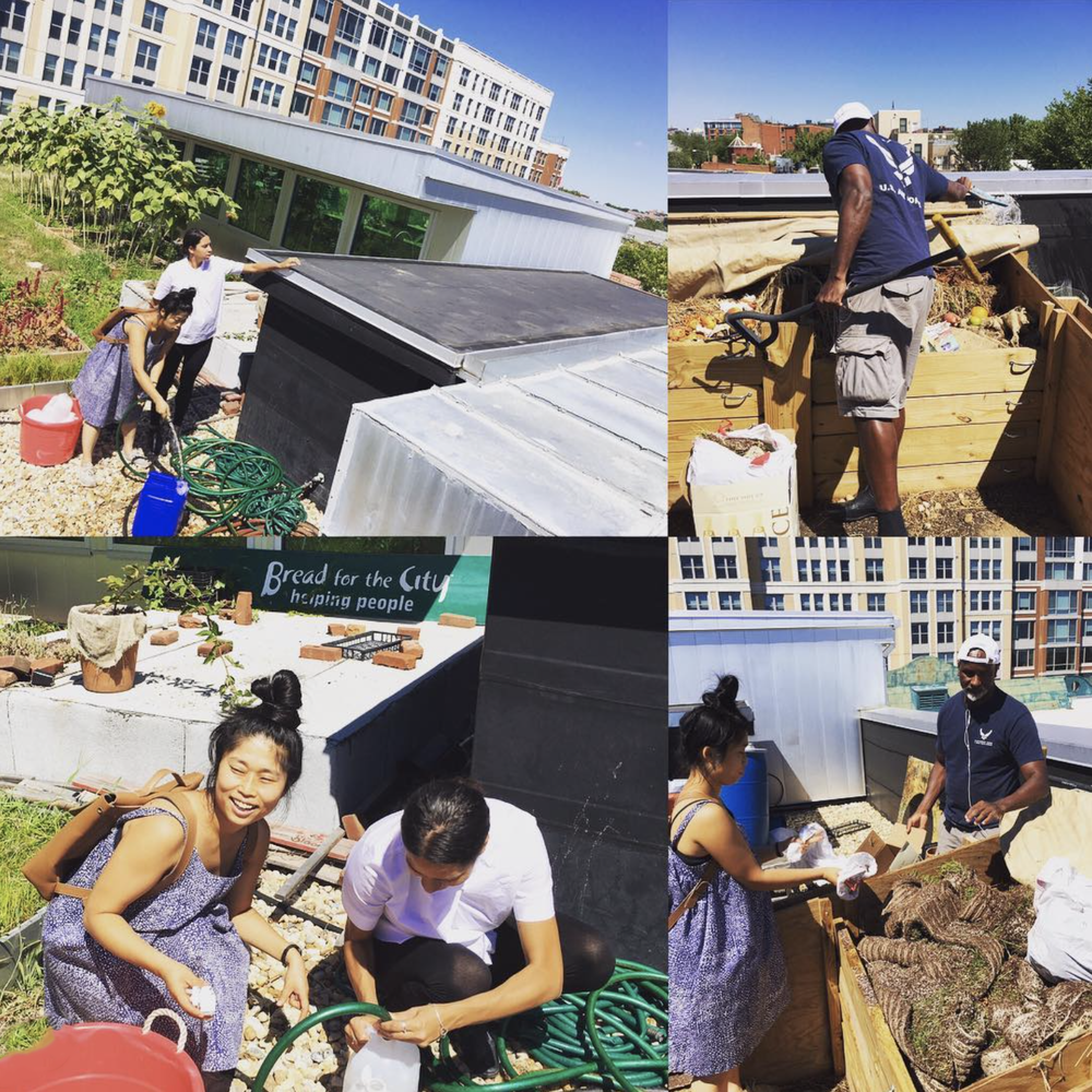All of the wheatgrass scraps from Permacouterculture is composted at the rooftop garden at @breadforthecity ! Today Martin helped us compost and get rainwater for the wheatgrass! Interested in volunteer for the rooftop garden?! They need help every Tuesday 2-5!