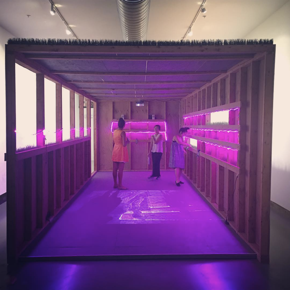 Paying homage to DC's punk scene while growing wheat grass in a wooden hotline bling hut @ #NaokoWowsugi 's new @hamiltoniangallerydc exhibit #PERMACOUNTERCULTURE 🌱🎸  post by  drzzl