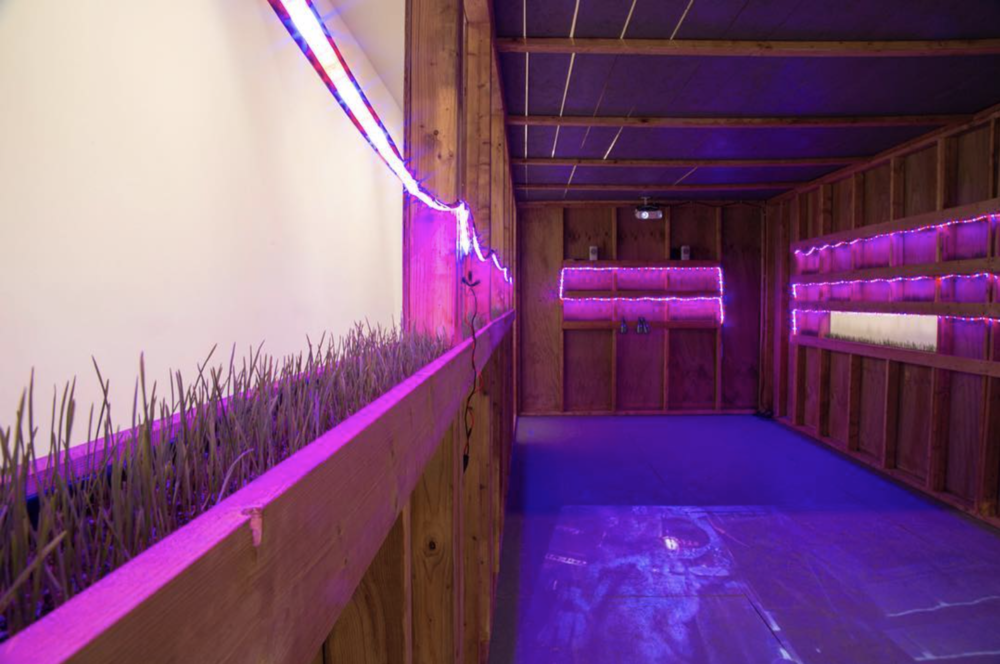 A look into the greenhouse that doubles as a punk music venue. Come get a free wheatgrass shot at the gallery today! And see recordings from the last show.
