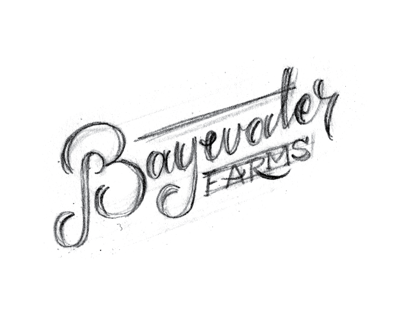 BaywaterFarms_LogoSketch_No12.png