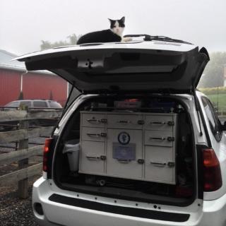 Cat on car.jpg